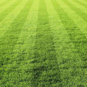 Smeša trava PANORAMA