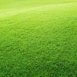 Smeša trava za SUNČANE TERENE